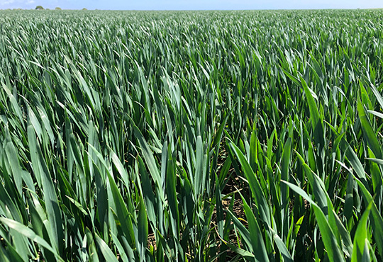Arable fields